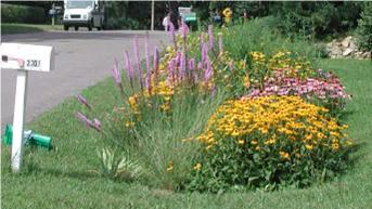 raingarden-reedy-creek-coalition
