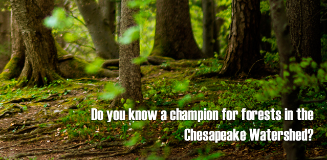 chesapeake-forest-champion