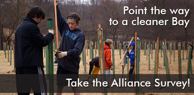 point the way to a cleaner bay: please take the Alliance survey